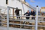 during the loading of Cattle at Greenore Port on Wednesday 19th October 2016.<br /> Picture:  Thos Caffrey / Newsfile