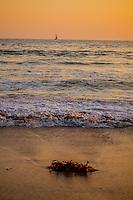 See Sea Kelp