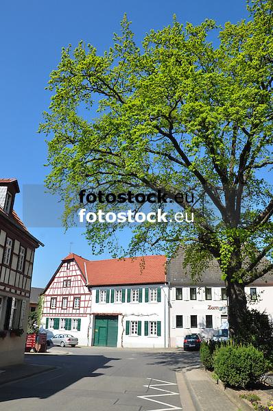 Dorfeiche und barockes Haus mit Torfahrt aus dem (19. Jh.), teils Fachwerk, teils massiv