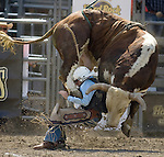 Wade, from Almono, N.M. is stepped on by Little Johnny during the Xtreme Bull Riding Competition at the Kitsap County Fair and Stampede  held Aug. 26 to Aug. 30, 2009 in Silverdale, WA. Jim Bryant Photo. All Rights Reserved. © 2009