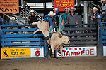 2016 Cody Xtreme Bulls