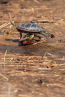 &quot;Balancing Act in the Sun&quot;<br />