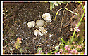14/05/2002                   Collect Pic : James Stewart.File Name : stewart-ducklings 05.THE REMAINS OF THE DUKS NEST ON THE ROOF TOP GARDEN IN ST.ANDREWS.......(see copy from George Mair / Tim Bugler).......Payments to :-.James Stewart Photo Agency, 19 Carronlea Drive, Falkirk. FK2 8DN      Vat Reg No. 607 6932 25.Office     : +44 (0)1324 570906     .Mobile  : +44 (0)7721 416997.Fax         :  +44 (0)1324 570906.E-mail  :  jim@jspa.co.uk.If you require further information then contact Jim Stewart on any of the numbers above.........