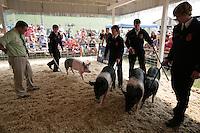 NW Washington Fair. August 16, 2009 PHOTOS BY MERYL SCHENKER            ....schenker IMG_1049.JPG