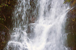 Water falls in Lake Quinault  is located in glacial carved, Rain Forest  area of the Quinault  Valley in the Southern Olympic mountains area in Washington's Olympic National Park. Lake Quinault  is a year-round destination. In summer, visitors come for views of the Olympic Mountains, fishing, swimming, and as well as for superb hiking. During the winter months Lake Quinault  still offers hiking and fishing. The weather in the Olympic Mountains Rain Forrest is unpredictable, and visitors should be prepared for snow and rain at any time of year.   Jim Bryant Photo. ©2014. All Rights Reserved.