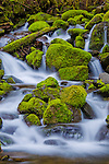 Olympic National Park, WA<br /> Small stream flows on moss covered rocks in the upper Soleduck valley
