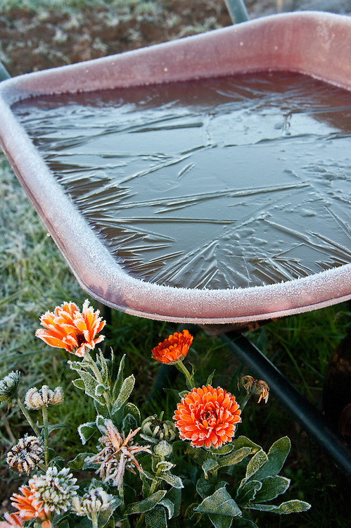 Iced-over water tank, allotment site, late October.