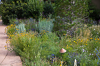 Colorado front yard meadow garden with Southwest White Pine tree, Ratibida flowers, and dwarf Rabbitbrush (Chamisa), Quercus gambellii (Oak). Design by Tom Peace
