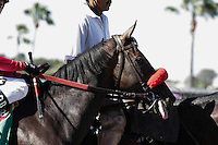 Norvsky in the Del Mar Mile at Del Mar Race Course in Del Mar, California on August 26, 2012.