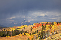 Thunderstorm, Fall Colors, Grand Tetons from the Bridger Teton National Forest