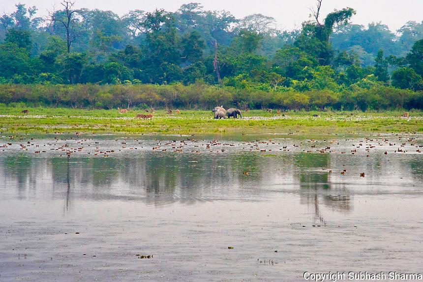 Kaziranga National Park , Assam :  A Walk with Wild Asian Elephants