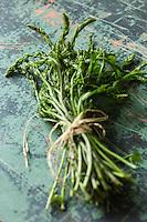 France, Aveyron (12): Respounchous, Les jeunes pousses sont parfois consommées comme des asperges au printemps