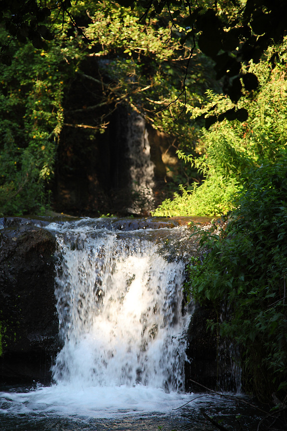 A view of a part of the small waterfall, that makes part of the Treja river, in a natural landscape with abundant green vegetation. This is among the main characteristic of the locality that is called &ldquo;Monte Gelato&rdquo; (the chilled mountain), near Rome, that belongs to a Natural Reserve. The photo is taken in the early morning.<br /> <br /> You can download this file for (E&amp;PU) only, but you can find in the collection the same one available instead for (Adv).