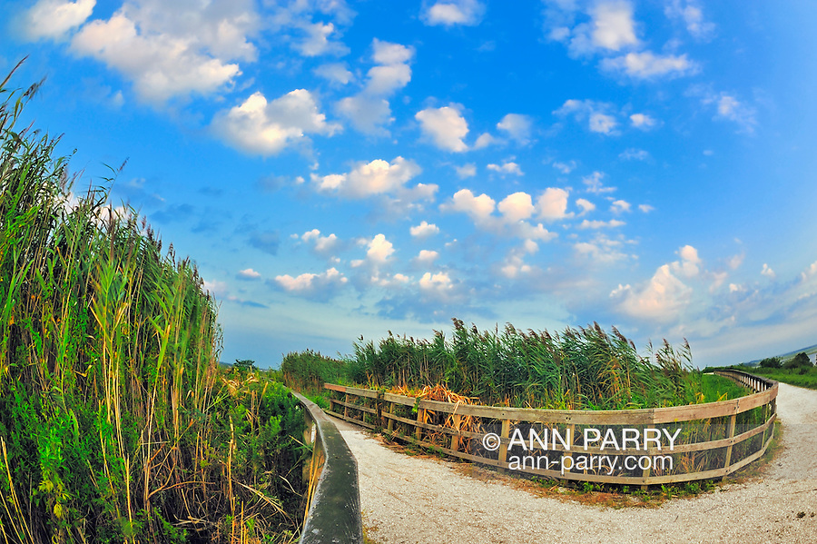Marshland, tall reeds blowing in wind (some motion blur), with stone path and curved wood fences around marsh grass, small puffy clouds, at Levy Preserve in Merrick, Long Island, New York, USA, Summer 2011. NOTE: taken with 180 degree fisheye lens