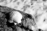Black and White Photo of a Shell on Pohara Beach, South Island, New Zealand. Woke up this morning at Pohara campsite with the beach a stones throw away. I rose early, but the sun didnt. As a result, I decided to try out a few slightly different shots using the blurred sea as the background. This one was my favourite. There were some incredible spots up around the Golden Bay area. Despite its name coming from its birth from the gold mining industry, not its beaches, the sand was indeed Golden. Thinking we'd finally found our spot to kayak, we discovered we'd been beaten to it by a school group who had greedily taken out all 30 kayaks!