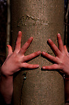 A912KA Two hands shown against a tree trunk