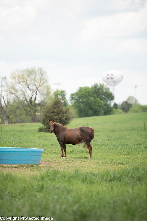 Horses on South Farm