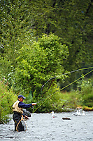 Fishing on the Russian River, Kenai Peninsula, Chugach National Forest, Alaska.