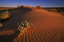 Australia, Queensland; Sand dunes in Simpson Desert