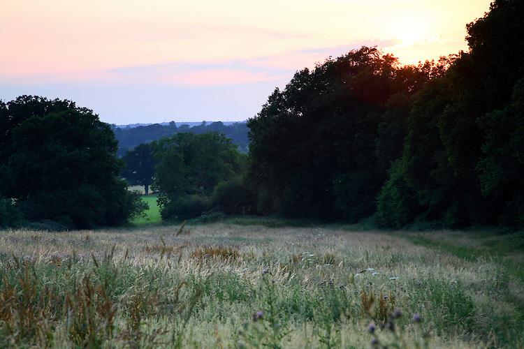 Fallow summer meadow