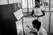 Mathumita pulls out vaccines from the fridge at the government health centre in Tharmapuram in North Kilinochchi, Sri Lanka.  Photo: Sanjit Das/Panos