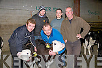 CALFS: Checking over their calfs before the Special Weanling Sale at Kingdom Mart,Mounthawk, Tralee on Tuesday evening, Front l-r: Aaron O'Dowd (Castlemaine), and Sean McKenna (Keel). Back l-r: Shane O'Dowd (Castlemaine), Diarmuid McCarthy (Scartaglin) and Brendan Griffin (Ardfert)..