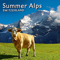 Swiss Alps Summer | Pictures Photos Images & Fotos