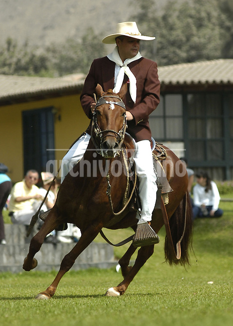 A man rides a horse called 'Caballo de Paso Peruano' during an exhibition in Lima, Monday, July 28, 2008. The Peruvian Paso or Peruvian Hourse is a breed of light pleasure saddle horse known for its smooth gaits. It is distinguished by a natural, four beat, lateral gait called paso llano that is noted for its smoothness and harmony of movement.
