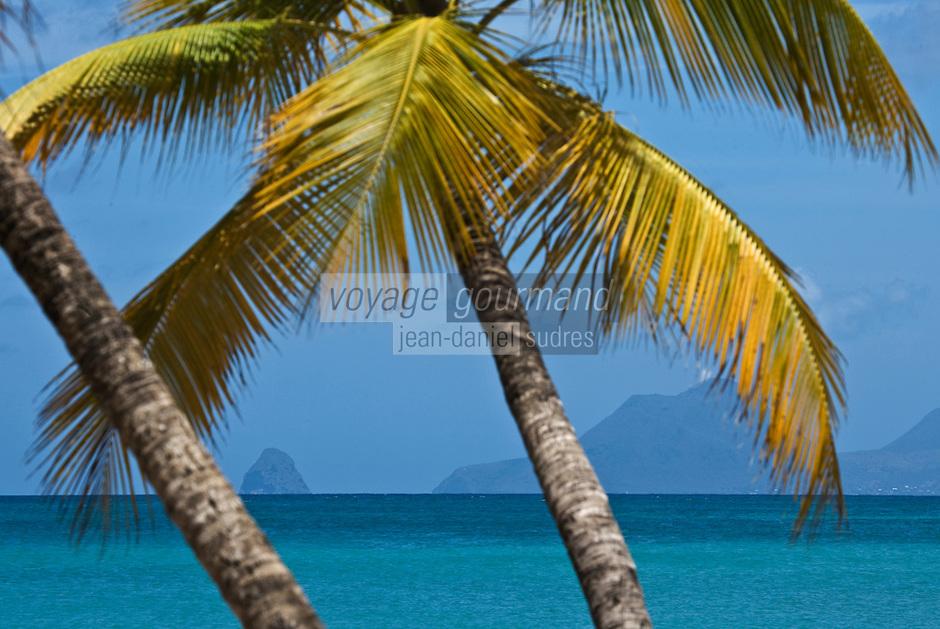 France/DOM/Martinique/env de Sainte-Anne: Palmiers  de la plage des Salines- Mer des  Caraïbes en fond le rocher du Diamant