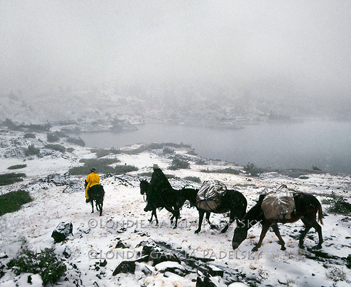 Cowboys leading pack mules in snow storm at Thousand Island Lake in the Ansel Adams Wilderness, Sierra Nevada California