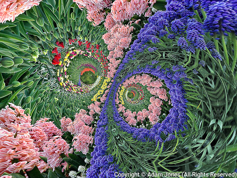 Fantasy tulip garden, Holland