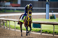 May 01, 2014: Wild Cat Redprepares for the Kentucky Derby at Churchill Downs in Louisville Ky. Alex Evers/ESW/CSM