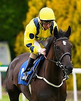 So Claire ridden by Martin Dwyer goes down to the start  <br />  of The Molson Coors Handicap  during Evening Racing at Salisbury Racecourse on 11th June 2019
