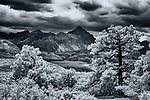 Black and white infrared image of trees framing a mountain peak