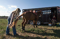 Johnsville, MD: J Bar W Ranch -- Libertytown's Ann Colson brushing Peanut's tail, as Ada Morders watches.