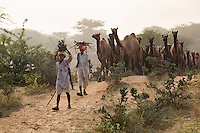 Camel herders arrive with their camels for the annual cattle fair in Pushkar Rajasthan, India.