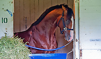 Union Rags gets frisky in his stall after morning workouts at Churchill Downs in Louisville, Kentucky on May 1, 2012.