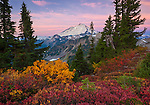 Mount Baker-Snoqualmie National Forest, WA: Mount Baker from Artists Ridge Trai at sunrise with huckleberries and mountain ash in fall color.