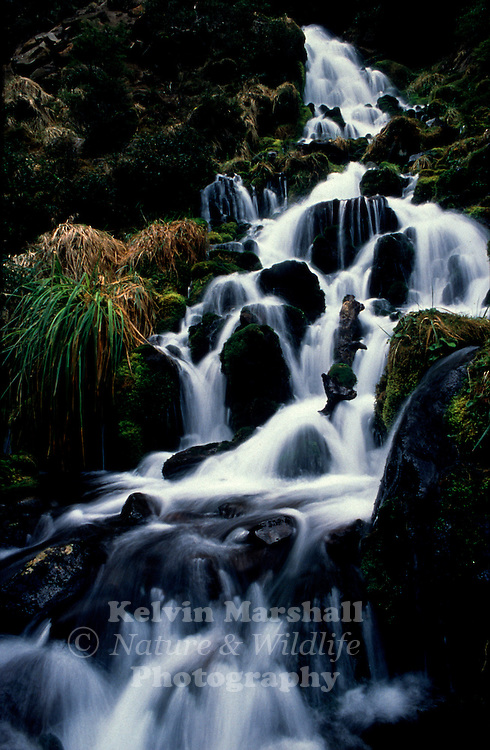 A cascading waterfall always captures the eye of a keen photographer. Whirinaki national park, New - Zealand.