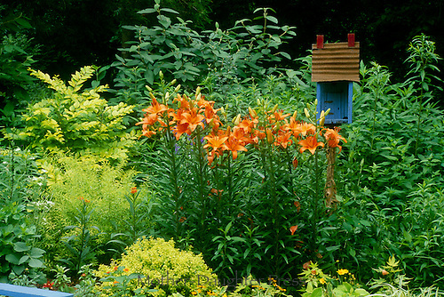 Blue birdhouse and garden lilies