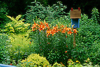 Blue birdhouse and garden lilies