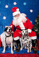 Snoopy and Bella pose for a holiday photo with Santa at Pet Pros in Redmond, WA to help raise money for Dogs Deserve Better on December 11, 2010. (photo by Karen Ducey)