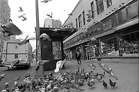 Circa 1989 A flock of pigeons outside Lamstons on West 23rd street