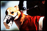 Flagler Greyhound race track is in Miami, Florida. There are races weekly where the dogs can run in excess of 35mph.