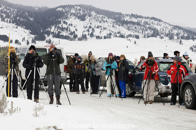 Tourists in Yellowstone National Park