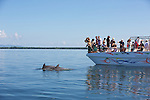 Tourists Viewing Bottlenose Dolphin