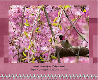 April 2011 Birds of a Feather Calendar