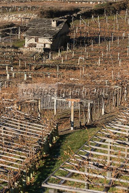 Italie, Val d'Aoste, Morgex: les vignes  d' Ermes Pavese,a // Italy, Aosta Valley, Morgex: Ermes Pavese  vineyards