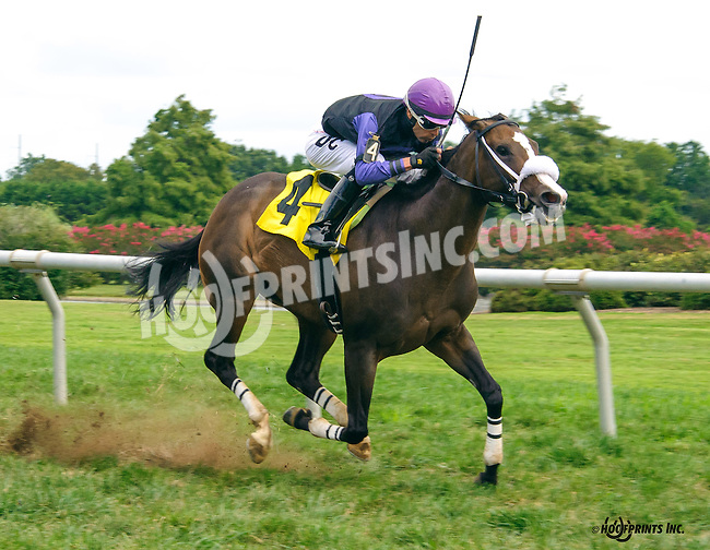 Yankee Wildcat winning at Delaware Park on 9/3/16