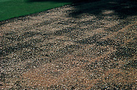Newly seeded lawn ground, renovating a lawn grass